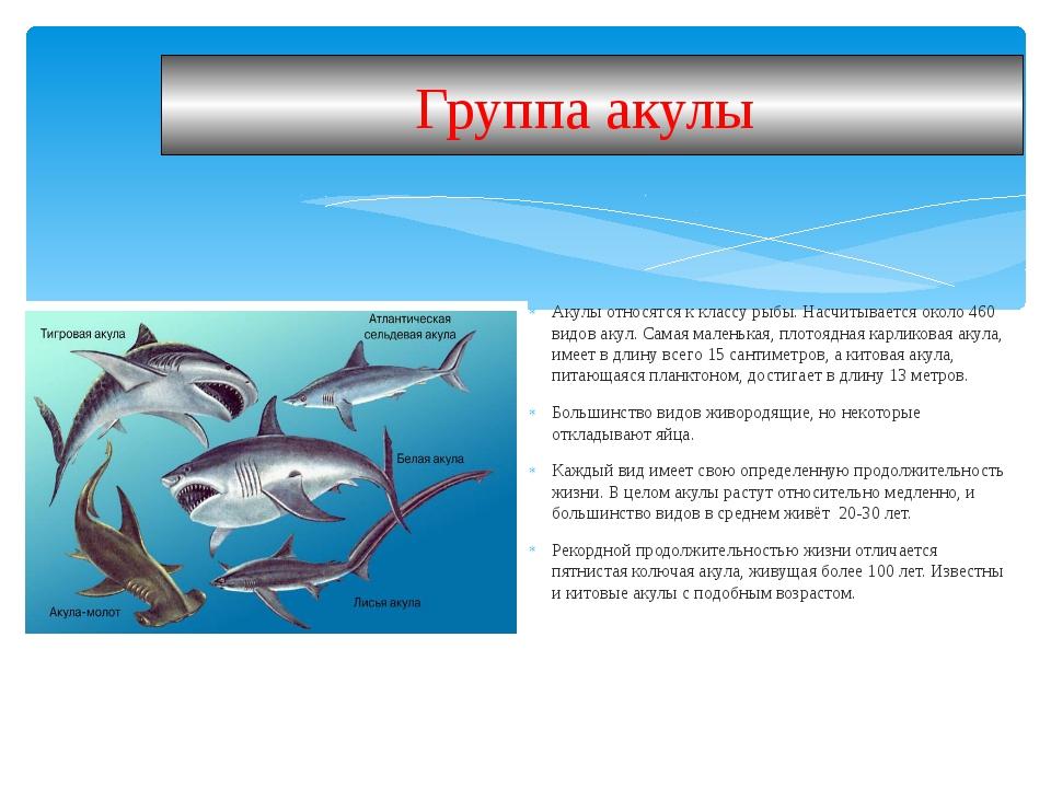 Акулы относятся к классу рыбы. Насчитывается около 460 видов акул. Самая мале...