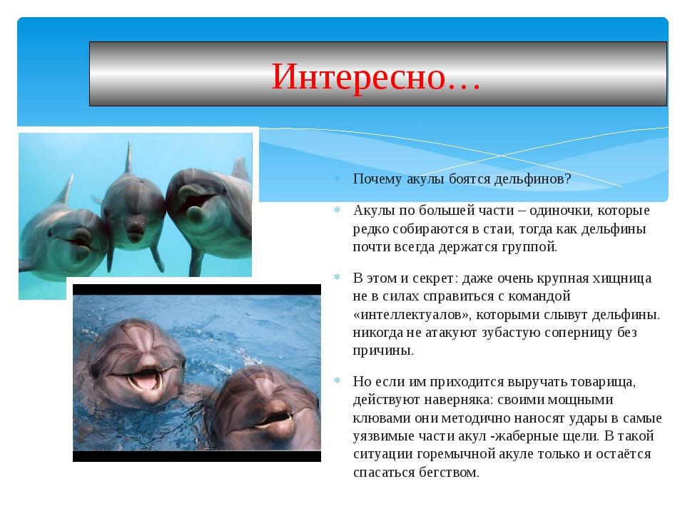 Почему акулы боятся дельфинов? Акулы по большей части – одиночки, которые ред...
