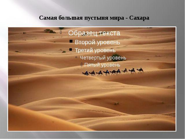Самая большая пустыня мира - Сахара
