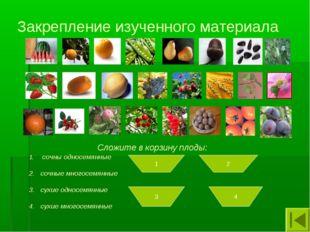 Закрепление изученного материала Сложите в корзину плоды: сочны односемянные