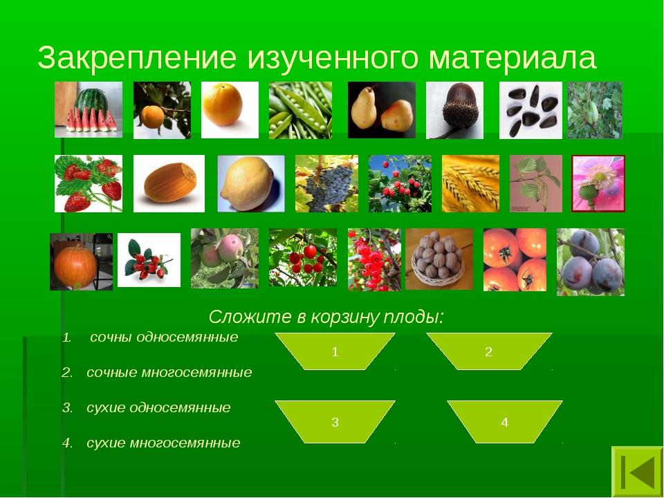 Закрепление изученного материала Сложите в корзину плоды: сочны односемянные...