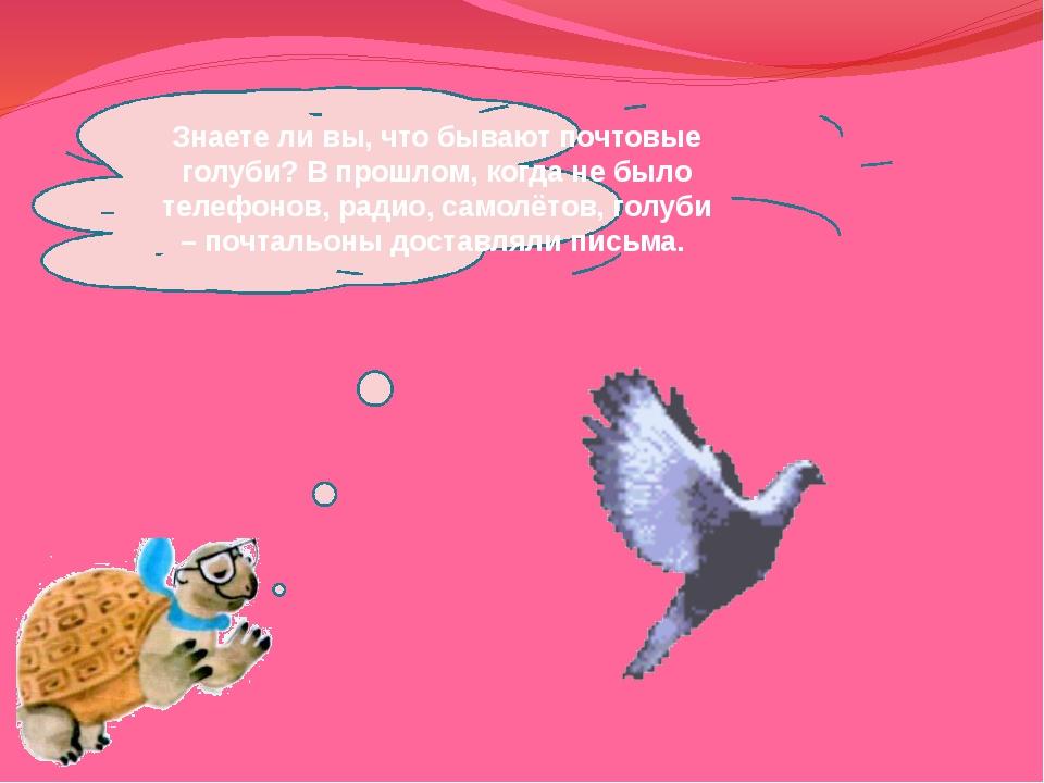 Знаете ли вы, что бывают почтовые голуби? В прошлом, когда не было телефонов,...