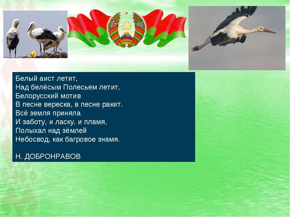 Белый аист летит, Над белёсым Полесьем летит, Белорусский мотив В песне ве...