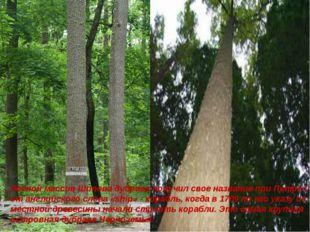 Лесной массив Шипова дубрава получил свое название при Петре I от английского