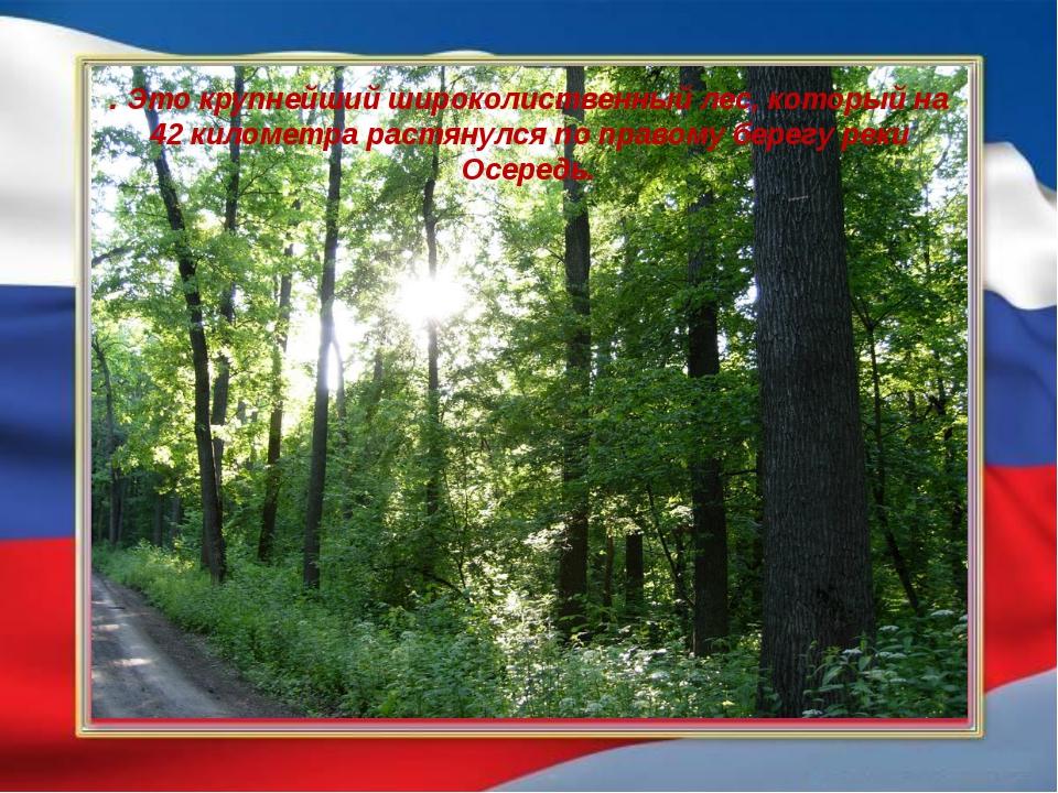 . Это крупнейший широколиственный лес, который на 42 километра растянулся по...