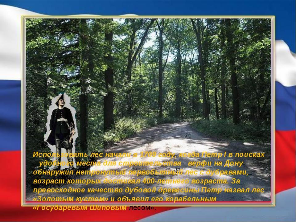 Использовать лес начали в 1709 году, когда Петр I в поисках удобного места д...