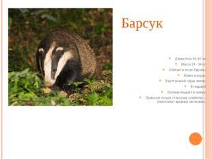 Барсук Длина тела 60-90 см Масса 24 - 34 кг Обитает в лесах Европы Живет в но