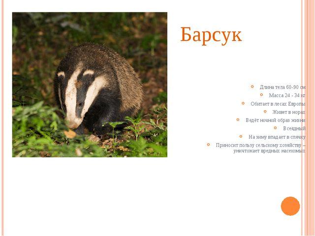 Барсук Длина тела 60-90 см Масса 24 - 34 кг Обитает в лесах Европы Живет в но...