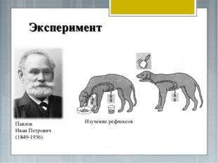 Эксперимент Павлов Иван Петрович (1849-1936) Изучение рефлексов