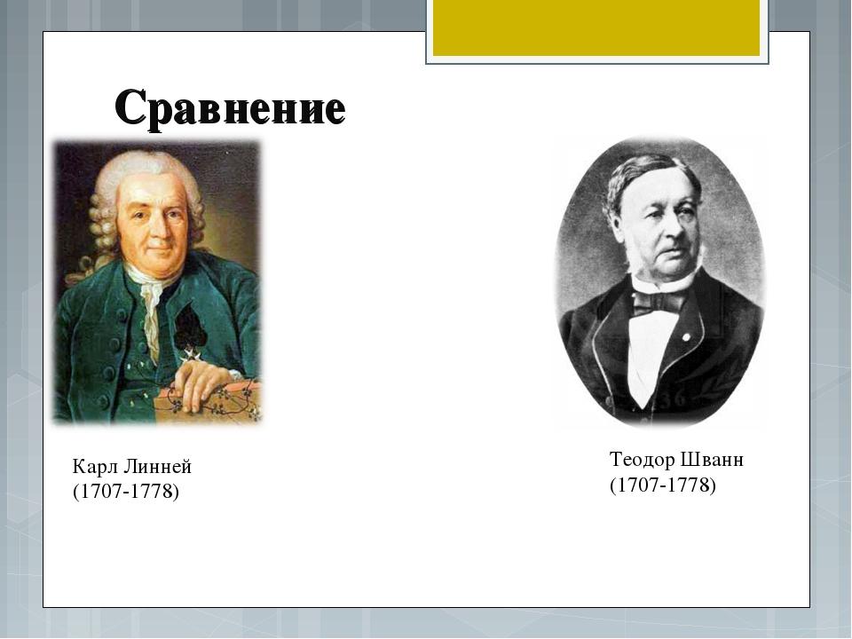 Сравнение Карл Линней (1707-1778) Теодор Шванн (1707-1778)