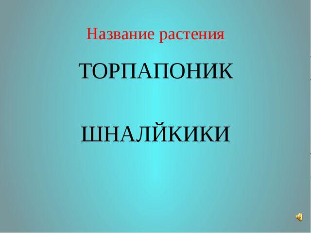 Название растения ТОРПАПОНИК ШНАЛЙКИКИ