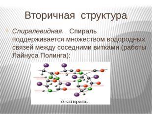 Вторичная структура Спиралевидная. Спираль поддерживается множеством водородн