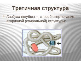 Третичная структура Глобула (клубок) – способ свертывания вторичной (спиральн