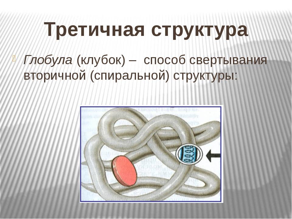 Третичная структура Глобула (клубок) – способ свертывания вторичной (спиральн...