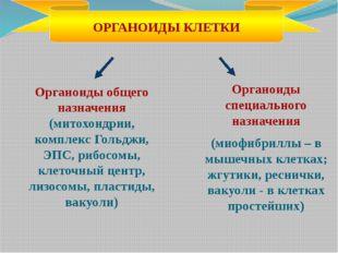 Органоиды общего назначения (митохондрии, комплекс Гольджи, ЭПС, рибосомы, кл