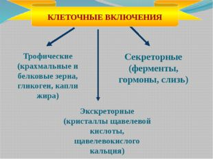 Секреторные (ферменты, гормоны, слизь) Трофические (крахмальные и белковые зе