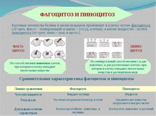 (франц. vacuole, от лат. vacuus - пустой), полости в цитоплазме эукариотическ