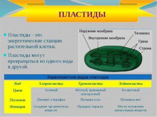 Полые цилиндрические структуры Функции: выполняют в клетке опорную функцию; о