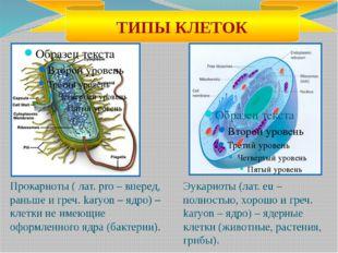 Прокариоты ( лат. pro – вперед, раньше и греч. karyon – ядро) – клетки не име