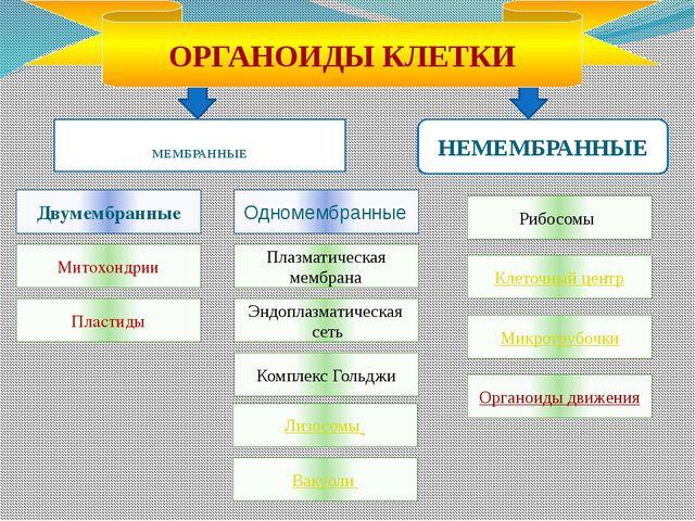 МЕМБРАННЫЕ НЕМЕМБРАННЫЕ Двумембранные Эндоплазматическая сеть Плазматическая...