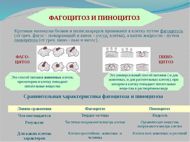 (франц. vacuole, от лат. vacuus - пустой), полости в цитоплазме эукариотическ...