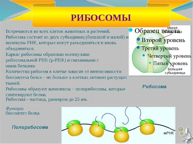 Органоиды клетки Название органоида Строение Функция