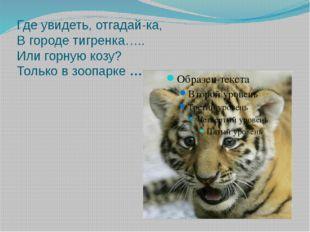Где увидеть, отгадай-ка, В городе тигренка….. Или горную козу? Только в зоопа