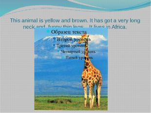 This animal is yellow and brown. It has got a very long neck and funny thin l