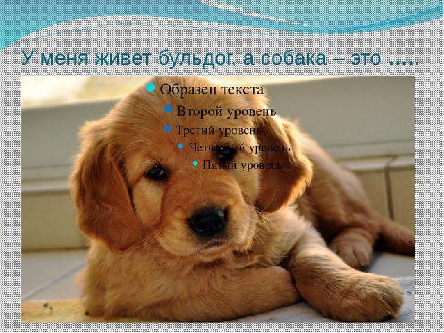 У меня живет бульдог, а собака – это …..