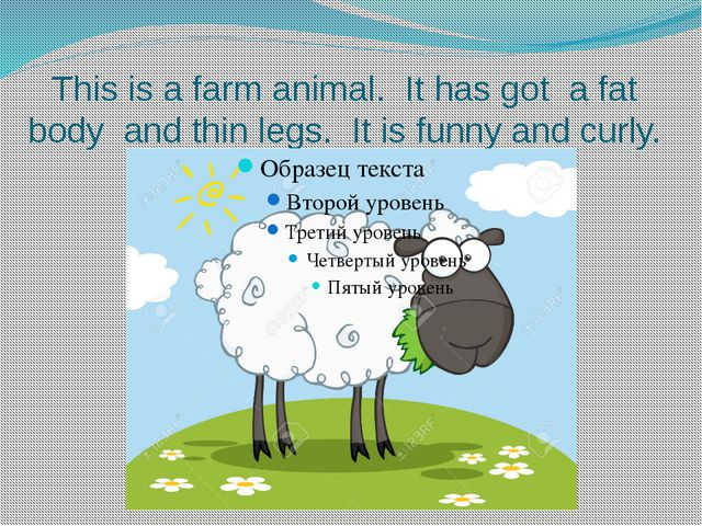 This is a farm animal. It has got a fat body and thin legs. It is funny and c...