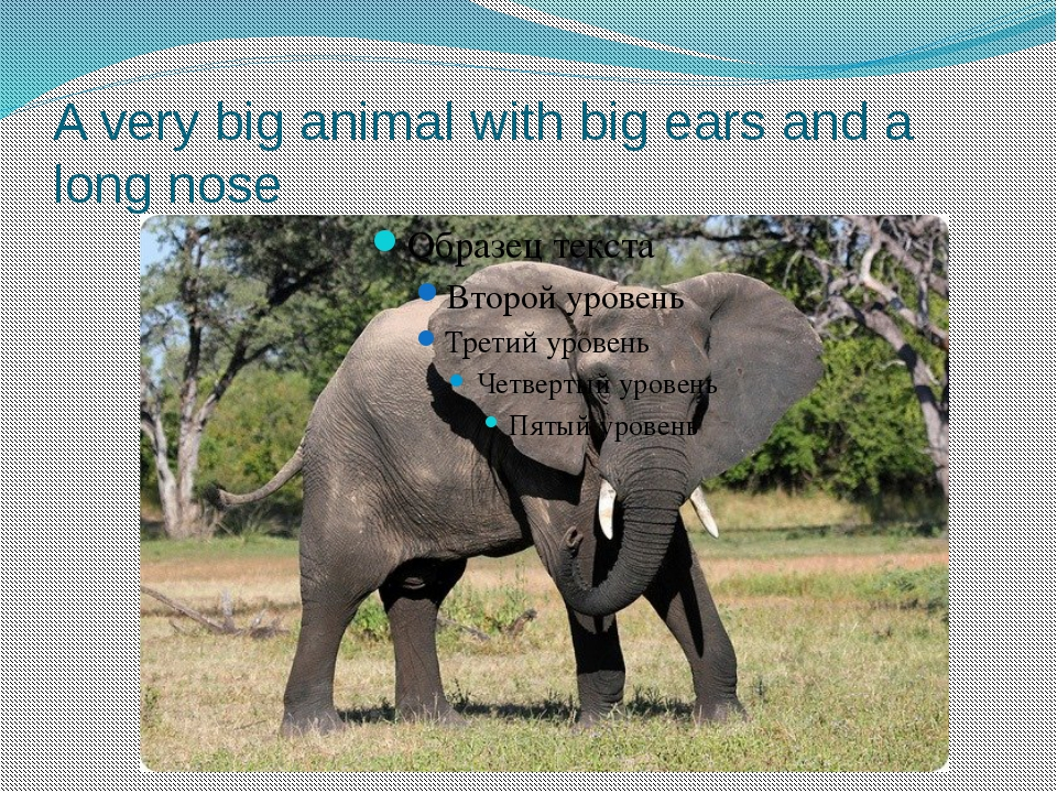 A very big animal with big ears and a long nose