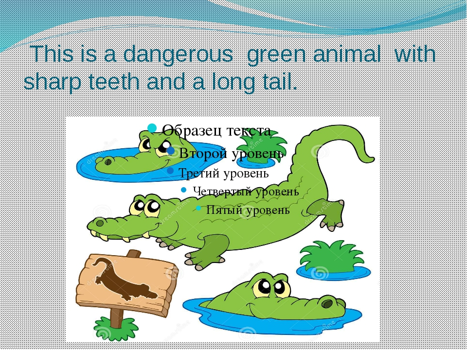This is a dangerous green animal with sharp teeth and a long tail.