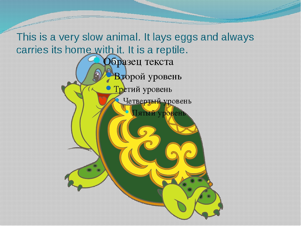 This is a very slow animal. It lays eggs and always carries its home with it....