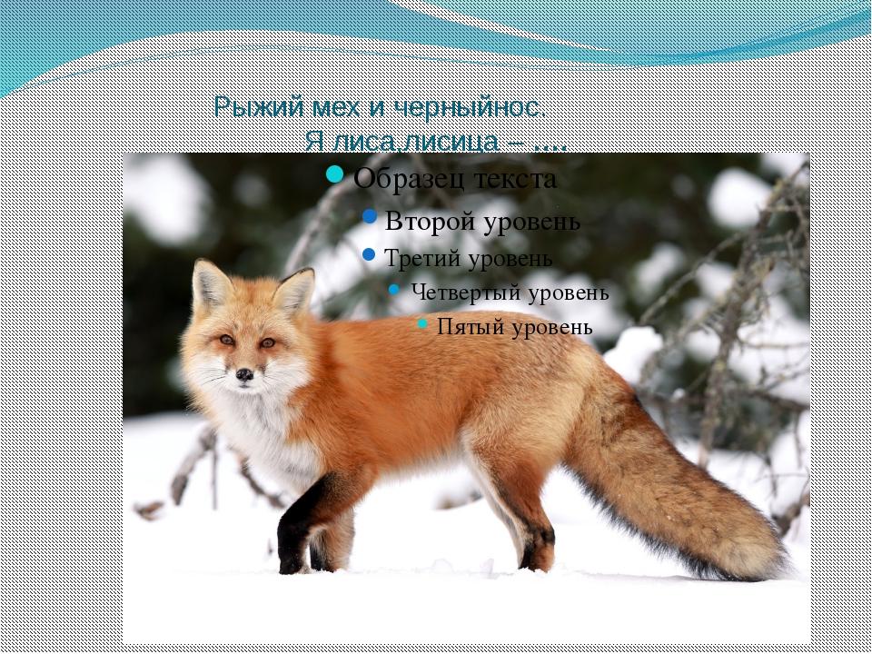 Рыжий мех и черныйнос.        Я лиса,лисица – ….