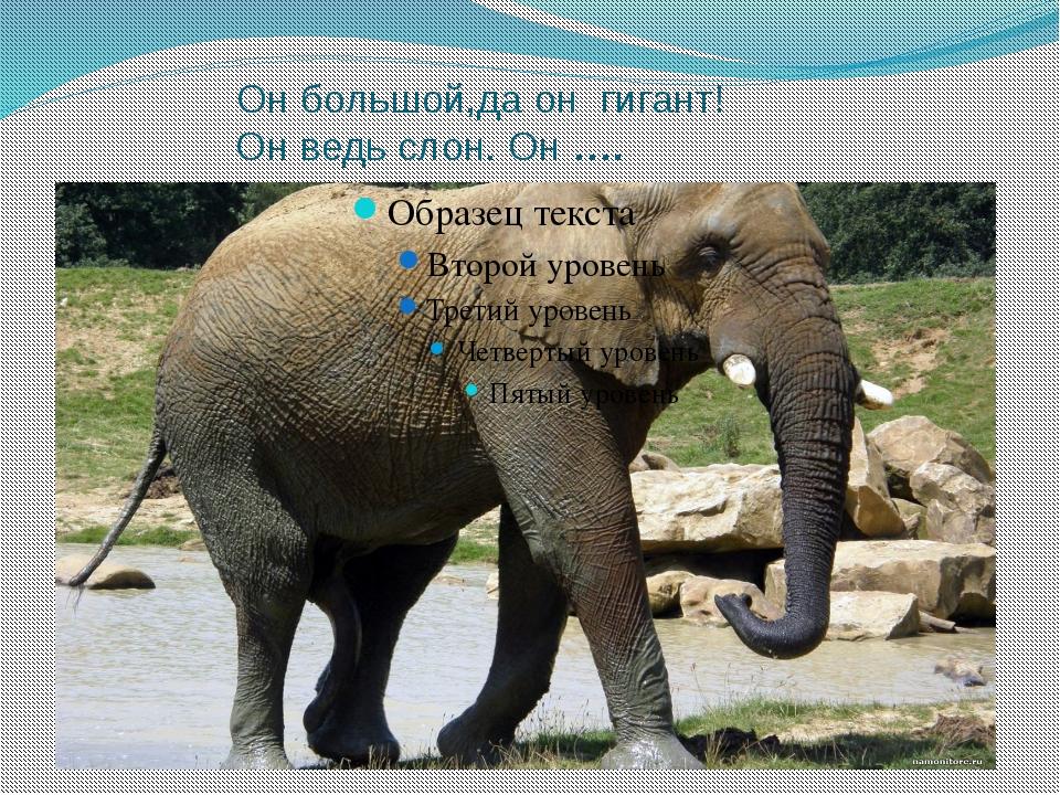 Oн большой,да он гигант! Он ведь слон. Он ….