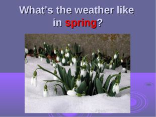 What's the weather like in spring?