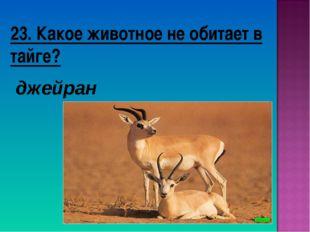 23. Какое животное не обитает в тайге? джейран