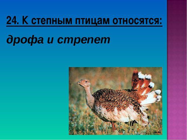 24. К степным птицам относятся: дрофа и стрепет