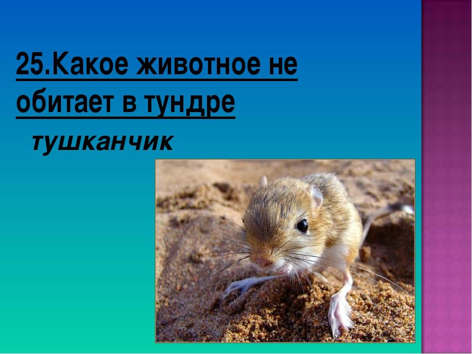 25.Какое животное не обитает в тундре тушканчик