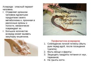 Аскарида - опасный паразит человека. Отравляет организм человека ядовитыми пр