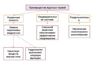 Преимущества Круглых червей Первичная полость Раздельнополые Замена паренхимы
