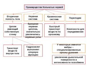 Преимущества Кольчатых червей Вторичная полость тела Параподии Целом имеющий