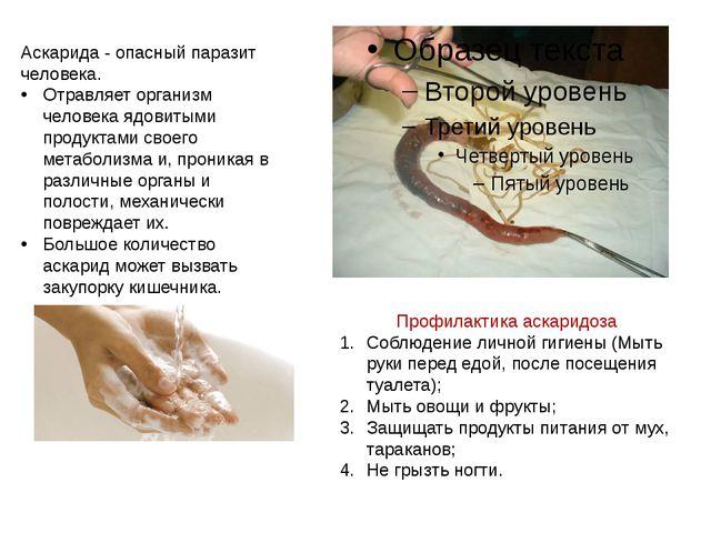 Аскарида - опасный паразит человека. Отравляет организм человека ядовитыми пр...