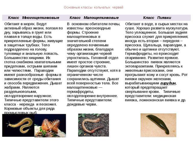 Основные классы кольчатых червей Класс Многощетинковые Класс Малощетинковые К...