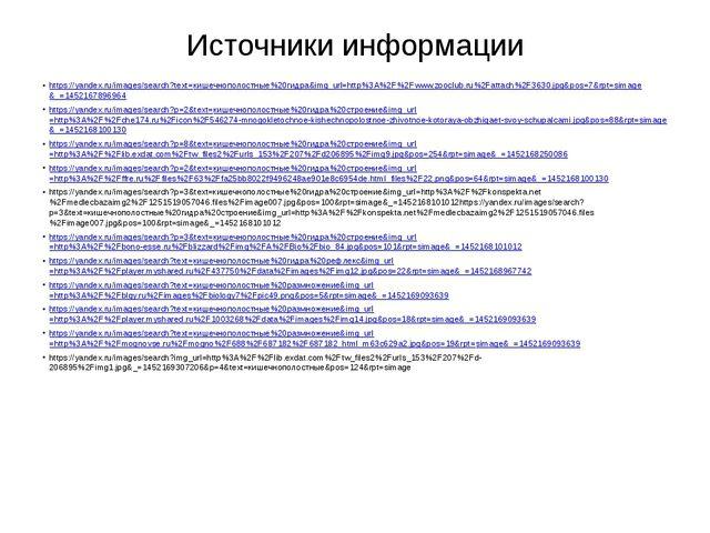 Источники информации https://yandex.ru/images/search?text=кишечнополостные%20...