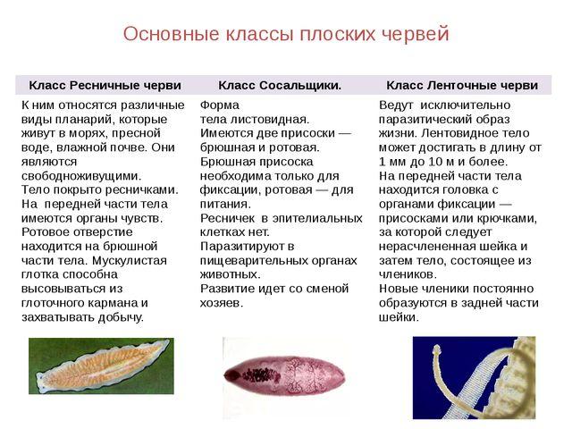 Основные классы плоских червей Класс Ресничные черви Класс Сосальщики. Класс...