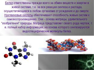 Белкиответственны прежде всего за обмен веществ и энергии в живой системе, т