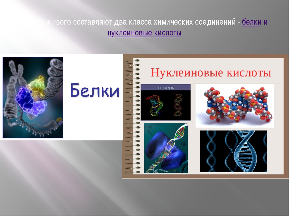 Основу живого составляют два класса химических соединений -белкиинуклеинов...
