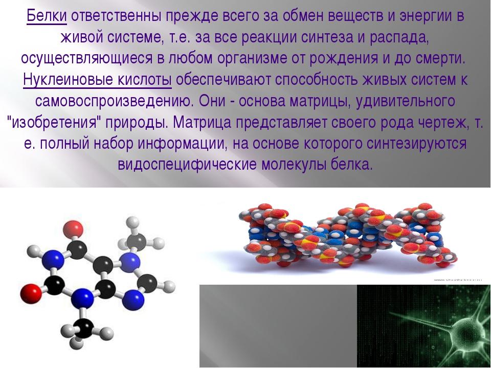 Белкиответственны прежде всего за обмен веществ и энергии в живой системе, т...