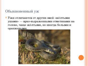 Обыкновенный уж Ужи отличаются от других змей «жёлтыми ушами» — ярко-выраженн